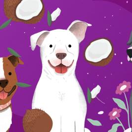 Crea perfumes caseros para tu perro