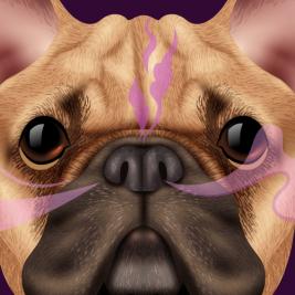 Curiosidades de la nariz de tu mascota