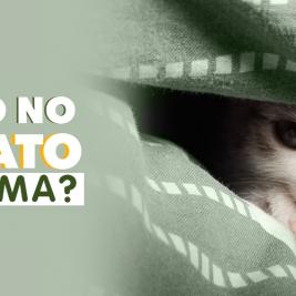 ¿Dejar o no a tu gato en tu cama?