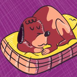 Eligiendo una cama para mi mascota