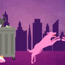 Nutrecan al rescate - ¿cómo es la vida de un perro callejero?