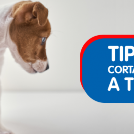 Tips para cortarle las uñas a tu perro